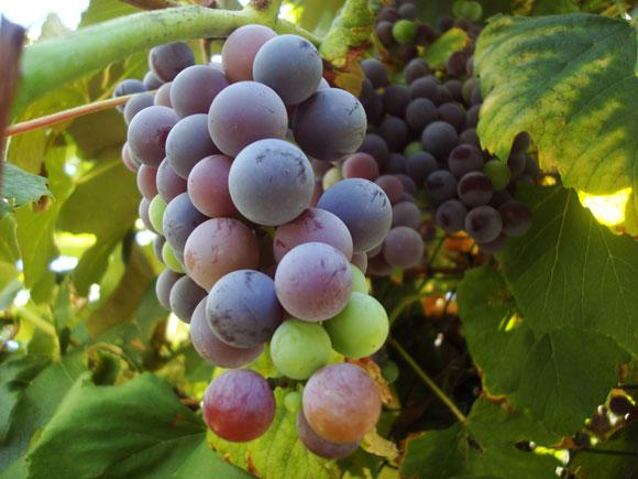 High Wine De Kromme Hoek